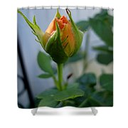 Bud Of A Rose Shower Curtain