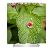 Bud Shower Curtain