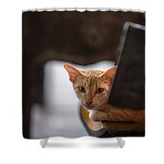 Buddhist Temple Cat Shower Curtain