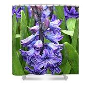 Budding And Flowering Purple Hyacinth Flower Shower Curtain