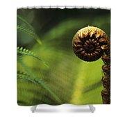 Budding Fern Shower Curtain