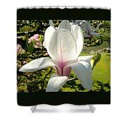 Budding Magnolia Shower Curtain