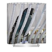 Budgerigar Shower Curtain