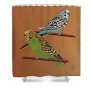 Budgies Shower Curtain