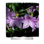 Buds And Blooms Shower Curtain