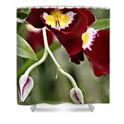 Buds And Blooms Orchid Shower Curtain
