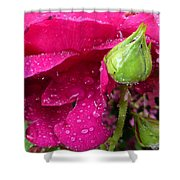 Buds And Drops Shower Curtain