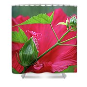 Buds Before Blooms Shower Curtain