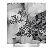 Buds In Black And White Shower Curtain