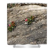 Buds Of Beauty Within Harshness Shower Curtain