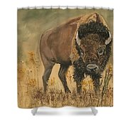 Buff Buffalo  Shower Curtain