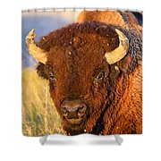Buff In The Badlands Shower Curtain