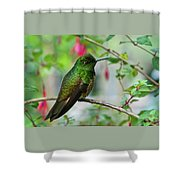 Buff-tailed Coronet Shower Curtain