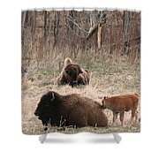 Buffalo And Calf Shower Curtain