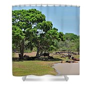 Buffalo At Hambantota Shower Curtain