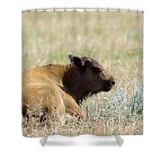 Buffalo Calf Shower Curtain