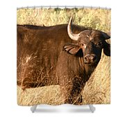 Buffalo Encounter Shower Curtain