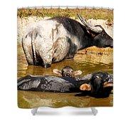 Water Buffalo Family Portrait Shower Curtain