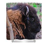 Buffalo Head Shower Curtain