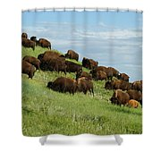 Buffalo Herd Shower Curtain