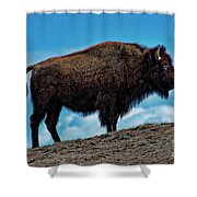 Buffalo In Profile Shower Curtain