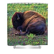 Buffalo In The Badlands Shower Curtain