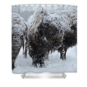 Buffalo In The Blowing Snow Shower Curtain