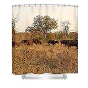 Buffalo In The Timbavati Shower Curtain