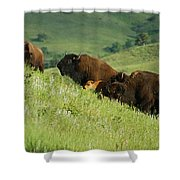 Buffalo On Hillside Shower Curtain