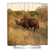 Buffalo On Safari Shower Curtain
