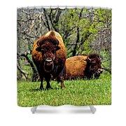 Buffalo Posing Shower Curtain