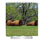 Buffalo Resting In A Field Shower Curtain