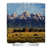 Buffalo Under Tetons 2 Shower Curtain
