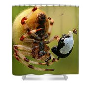 Buffet Shower Curtain
