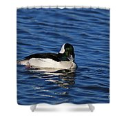 Buffle Head Shower Curtain