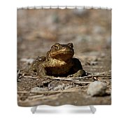 Bufo Bufo Shower Curtain