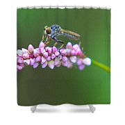 Bug Eyed Shower Curtain