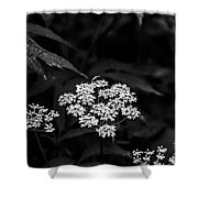 Bug On Flowers Black And White Shower Curtain