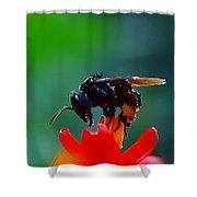 Bug Shower Curtain