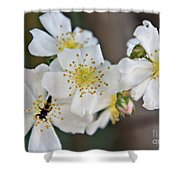 Bugaboo Apple Blossoms Shower Curtain