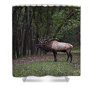 Bull Elk Bugle Shower Curtain