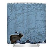 Bugling Bull Elk, Alberta Canada Shower Curtain