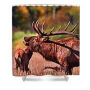 Bugling Elk In Autumn Shower Curtain