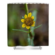 Build Me Up, Buttercup Shower Curtain