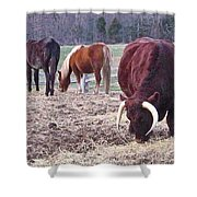 Bull And Horses, Mt. Vernon Shower Curtain