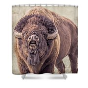 Bull Bison Shower Curtain