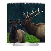 Bull Bugling For His Cow Shower Curtain