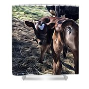 Bull Calf Shower Curtain