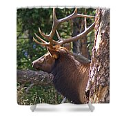 Bull Elk 2 Shower Curtain