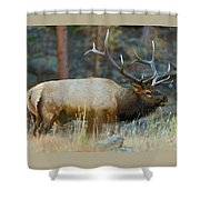 Bull Elk 6x6 Shower Curtain